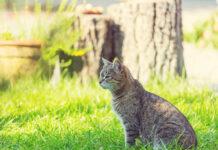 Ciekawe informacje odnośnie kotów